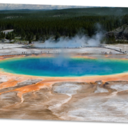 Official YNP Site